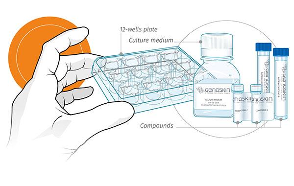 SkinTools® human skin biopsy culture kit contents
