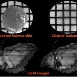 3D imaging skin