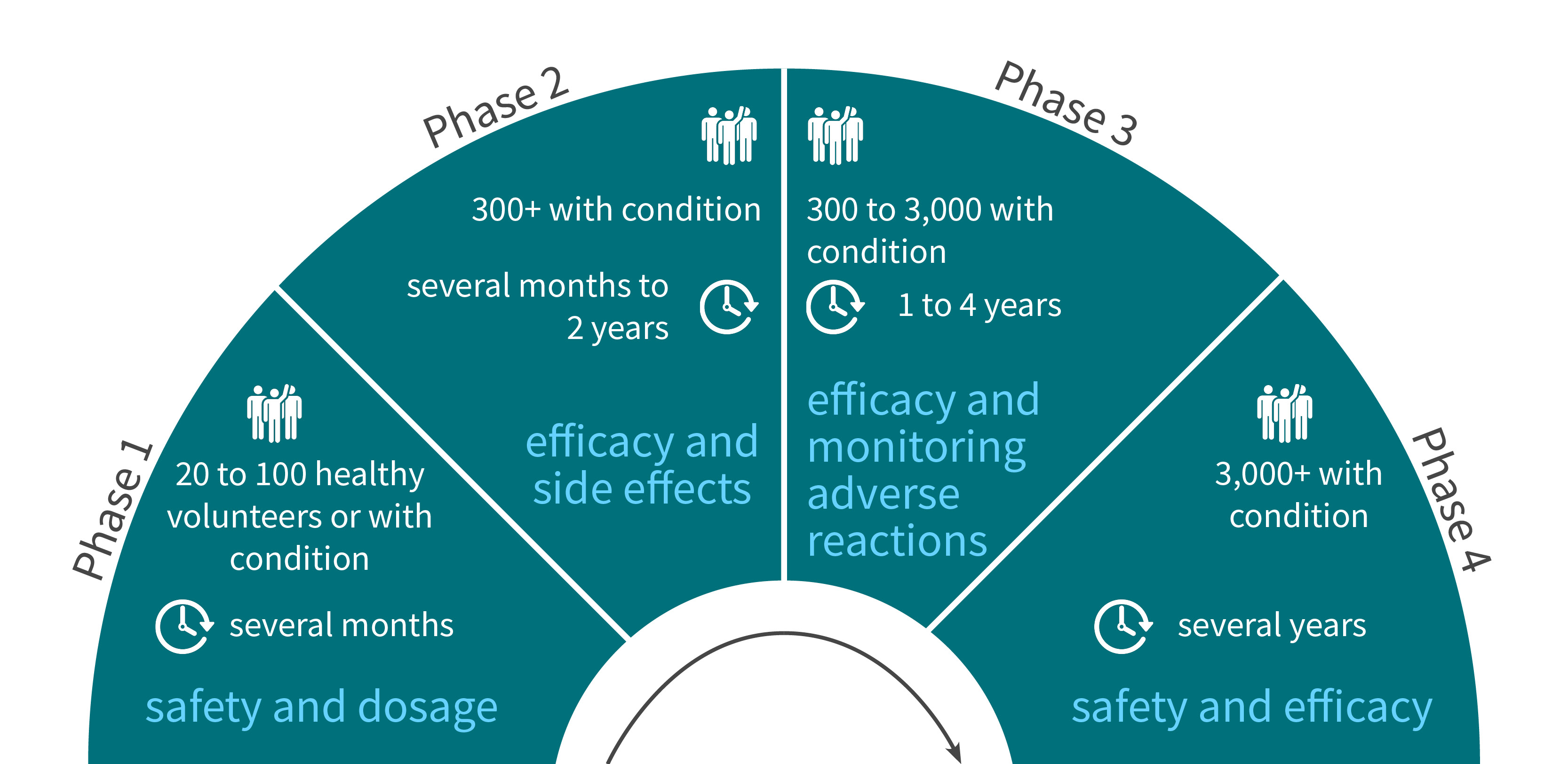 Scheme showing the 4 phases of clinical trials that are required for FDA approval