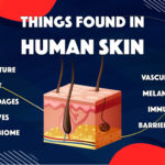 top things found in human skin vs in reconstructed human skin